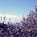 Etna and flowers of almond tree. by Maria Dattola