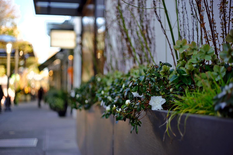 春天的街道 (三) - A7 + Leica Summicron-R 50mm