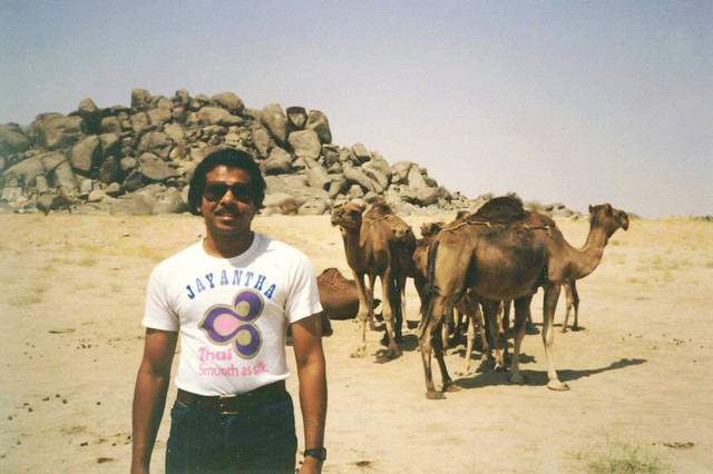 Jay and Camels