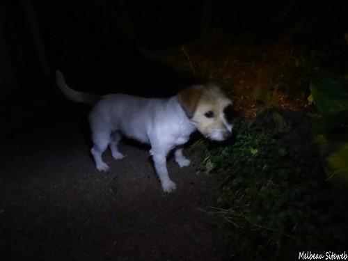 Le hérisson nocturne