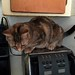 Caramel is … TOASTER CAT