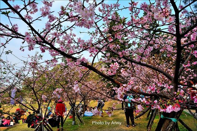 麗池櫻花19