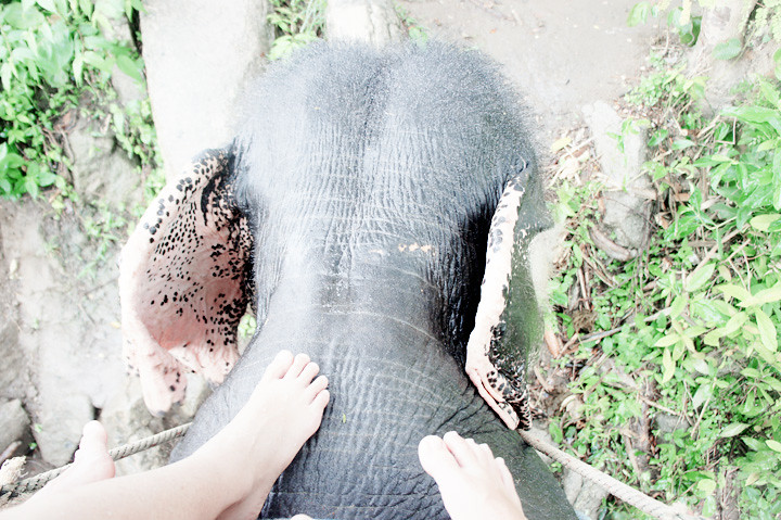 phuket elephant riding typicalben 5