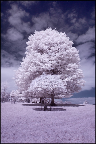 Trees Chatsworth Park - Infra Red Colour