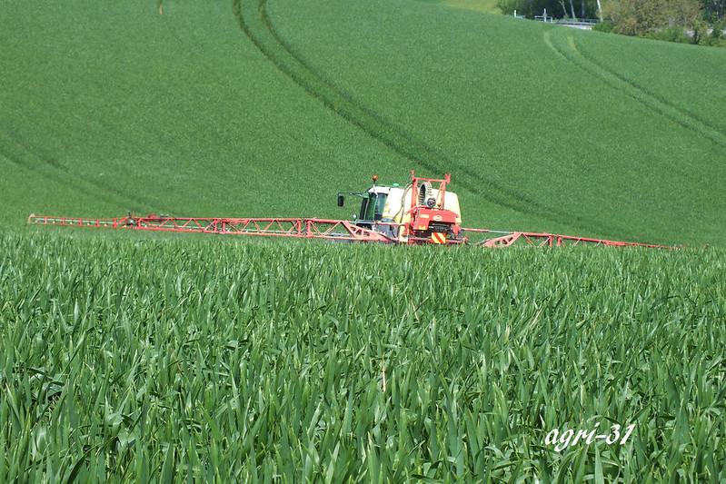 fongiside sur blé