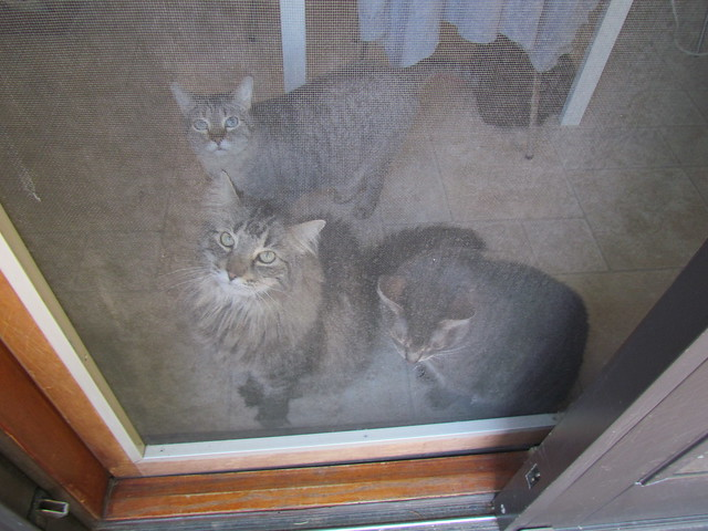 Kitties at the door