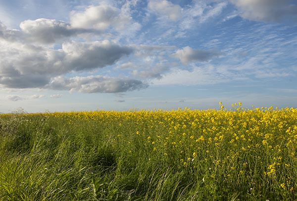 Soothing Wind Whispers over Rural Landscape  - Tayside Scotland