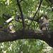 Washington Sq. Park fledgling