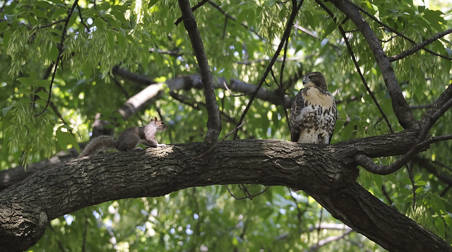 Washington Sq. Park fledgling