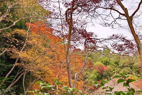 【写真】2012 紅葉 : 祇王寺/2021-09-05/IMGP7866