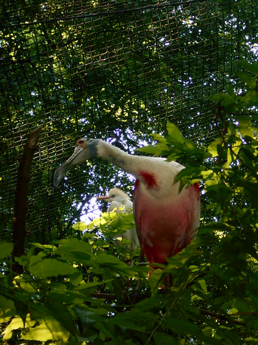 pink bird (1)