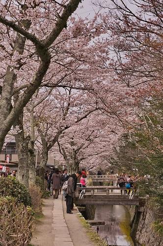 【写真】2013 桜 : 哲学の道/2018-12-24/IMGP9199