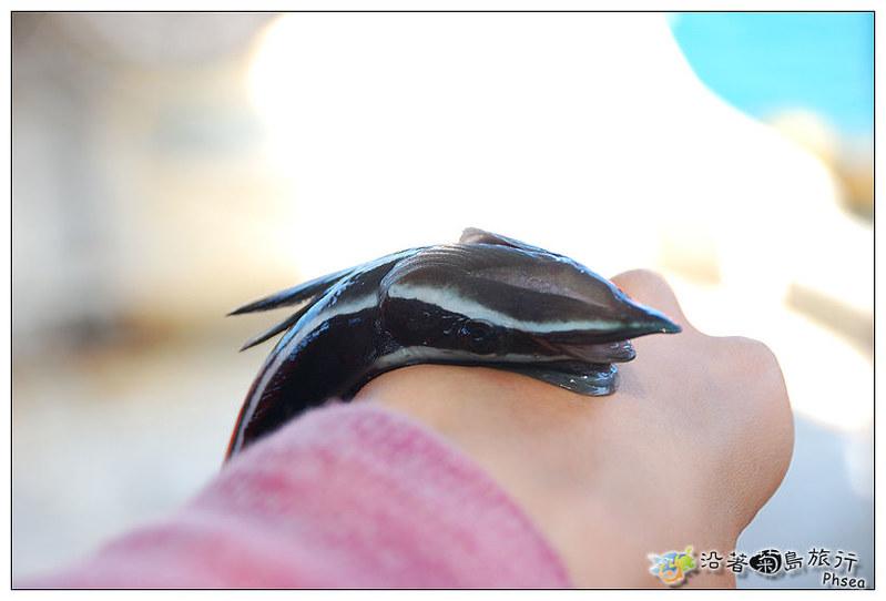 2013元貝休閒漁業_44