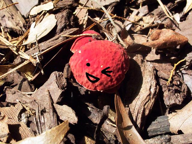 mushrooms-faces-2