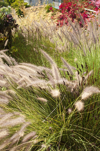 wave grasses and restios 3