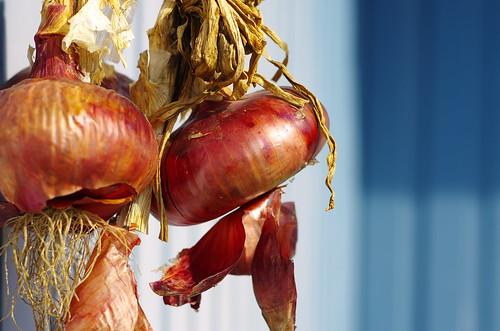 Onion by leicadaisuki