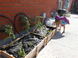 Gardens Growing (1)