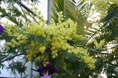 Leguminosae - Fabaceae