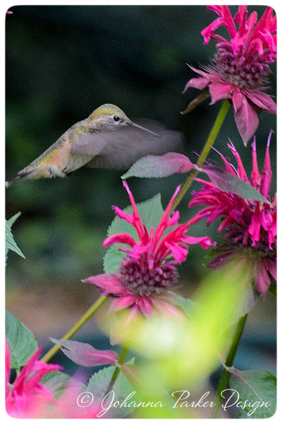 Hummingbird-flies