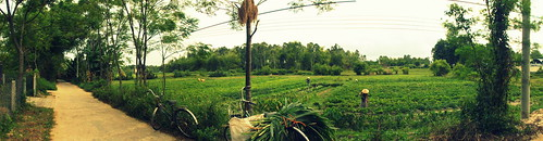 green grass greenfield danang