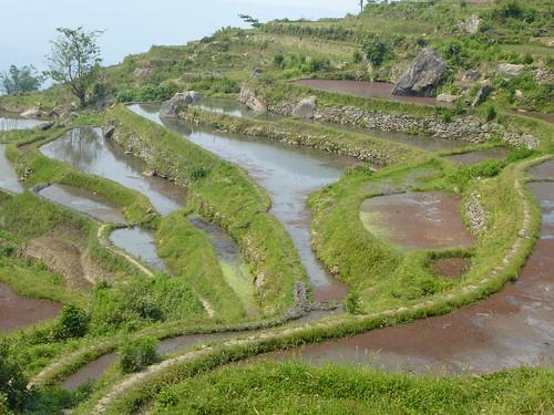Yunnan13-Yuanyang 18 (2)