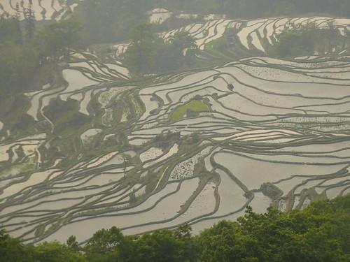 Yunnan13-Yuanyang 24-Bada (7)