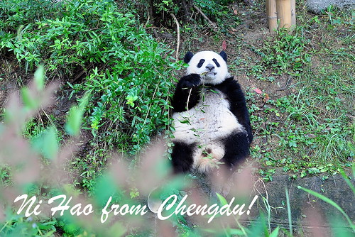 Postcard from Chengdu
