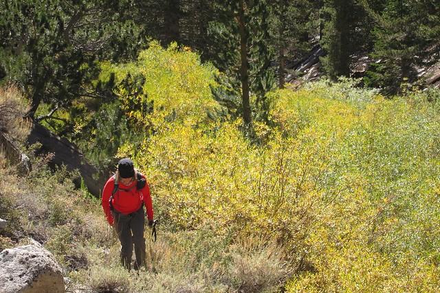 Trail following Little Cottonwood Creek