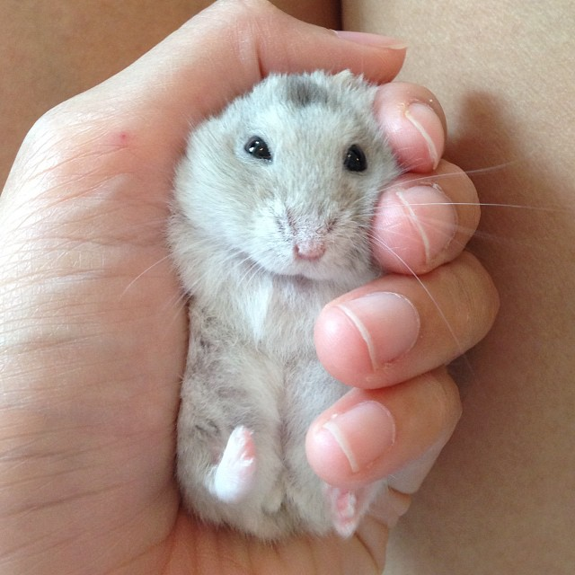 Just the right fit. #hammy #hammie #hamster #cute #cutenessoverload #pet