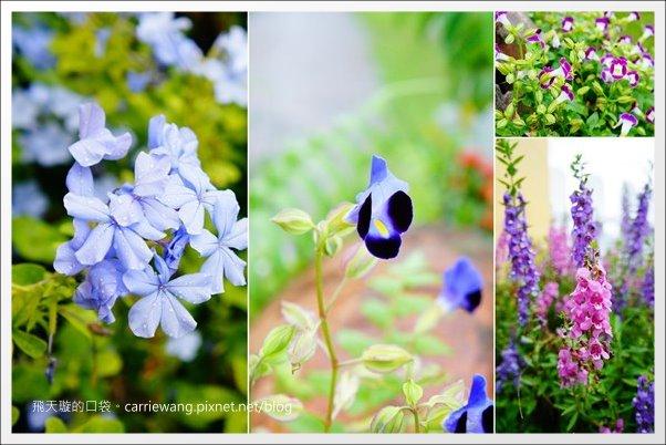 花蓮.花見幸福 (9)