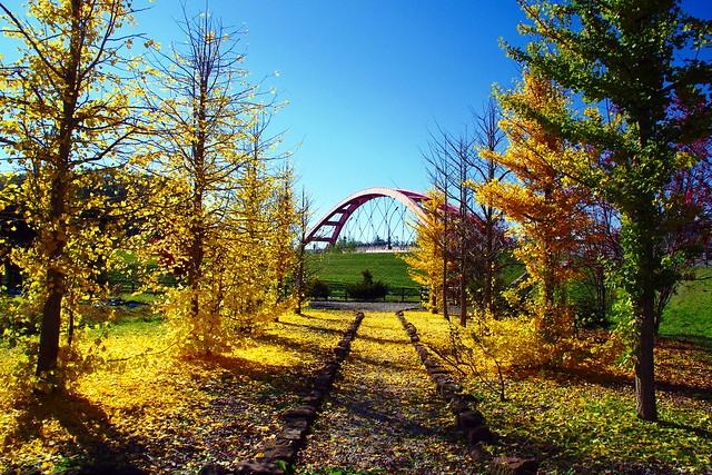 旧美瑛神社跡地の銀杏並木