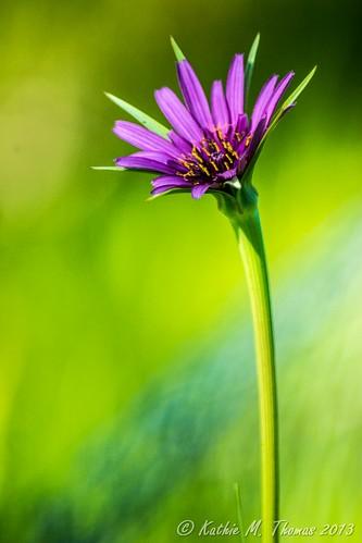 Unknown, purple daisy perhaps