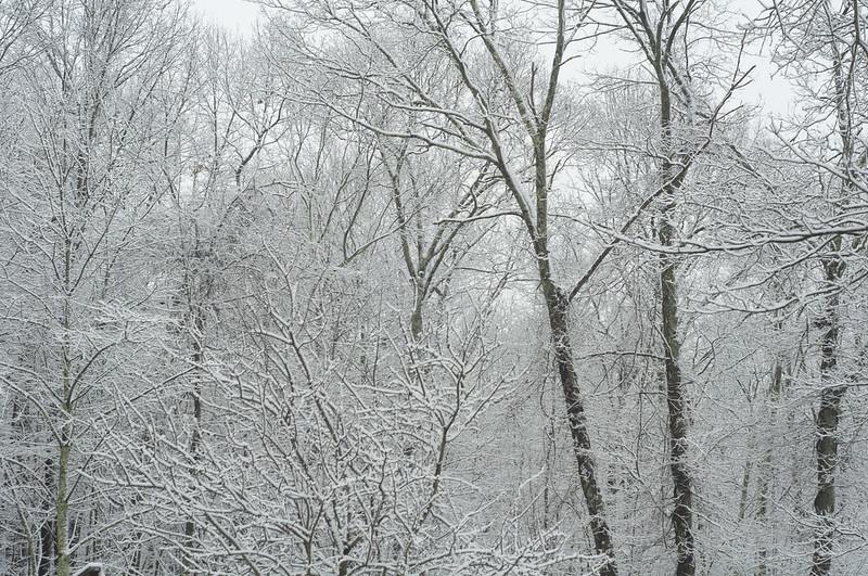 131210_snowwoodshp_037