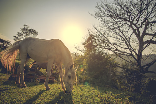 life sunset wild summer brazil horses sun tree love nature beautiful canon wonderful amazing top natureza like lovely tamron cavalo tamron2875mm maravilhoso canon6d