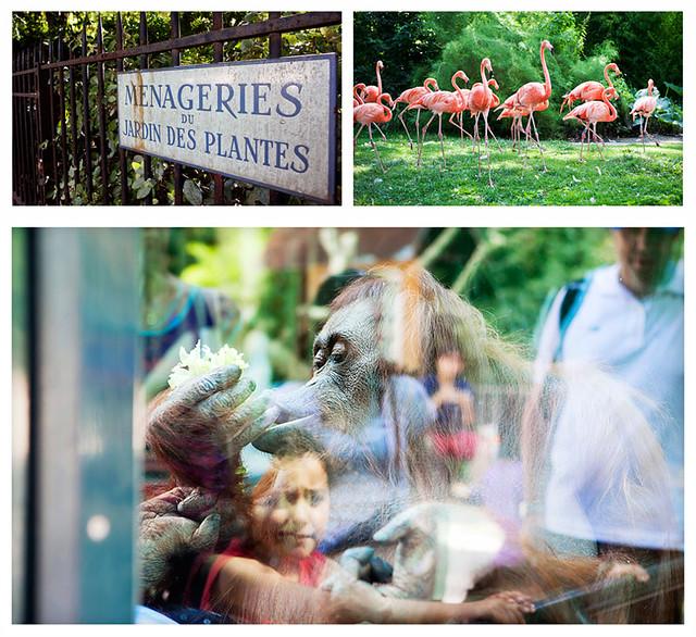 hbfotografic-paris-zoo (2)