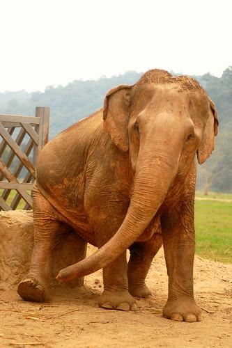 Elephant Nature Park 14