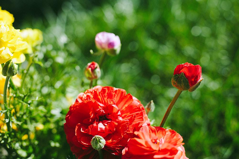 flowers_1_web