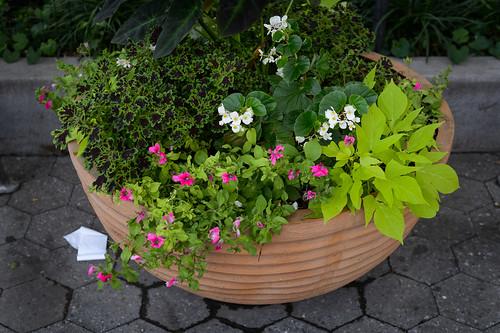 FilipWolak-LSBID-Gardens-8217