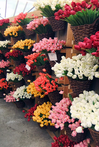 Tulips for Sale in the Flower Market in Amsterdam, Holland