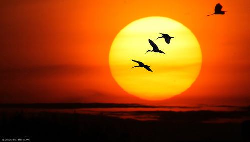 日落 鳥 日出