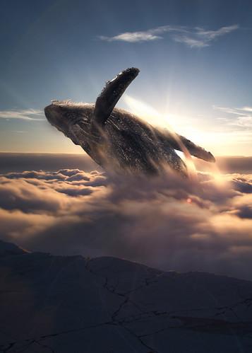 il volo della balena