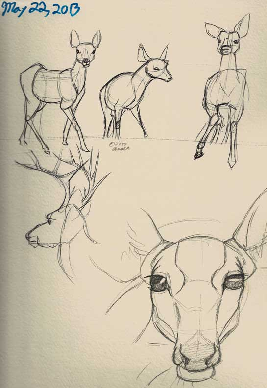 """The Secret Life of Deer"" Sketches"