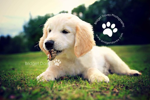 Marty | Pet Photography Leighton Buzzard