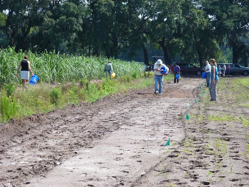 Participants spread wildflower seeds by hand to establish beneficial pollinator habitat at Dirt Works Incubator Farm on John's Island, in Charleston, S.C. Photo by Nancy Adamson, NRCS.