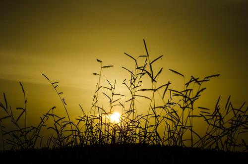 sunset naturaleza nature atardecer venezuela efa barinas 2013 escuelafotoarte hatocristero destinofotoarte efaenbarinas