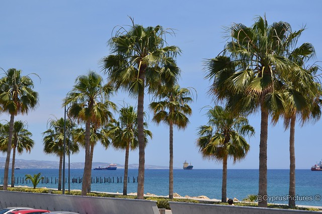 Palm tree lined seafront