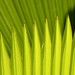 "Sharp green by Jerzy Durczak (a.k.a."" jurek d."")"
