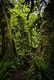 An American Rainforest