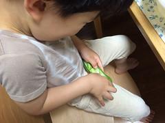 空豆をむくとらちゃん 2014/6/1
