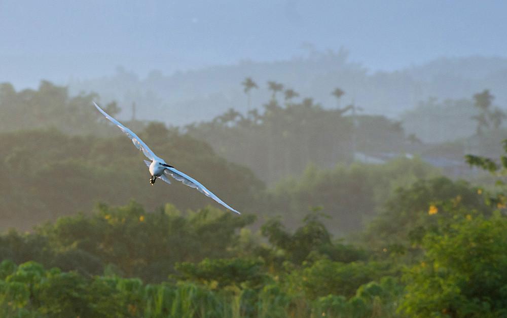 等日出時拍的鳥照片